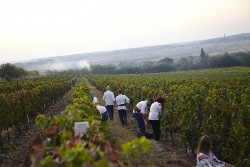 Moldova wine harvesting for over 5,000 years.